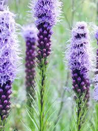 flowering bulbs planted in diy