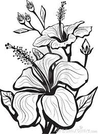 329x450 Gallery Picture Drawing Flower Art