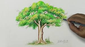 Tree Drawing A Tree With Simple Colored Pencils