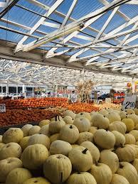 Kent Farms Pumpkin Patch by Carpinito Brothers 142 Photos U0026 112 Reviews Nurseries