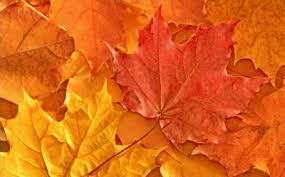Get Vivid Autumn Leaves Wallpaper