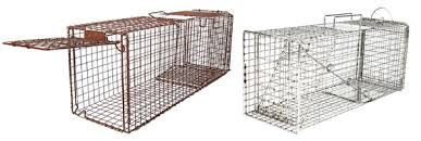 live cat trap national feral cat day traps on vox felina