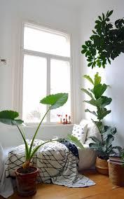 jungle zimmerpflanzen haus deko schlafzimmer