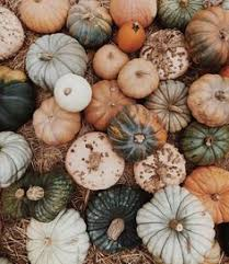 Moriarty Pumpkin Patch by Pin By Hannah Loki Moriarty Mcmanus On Aes Mi A Name I Call