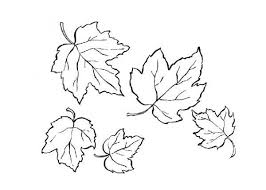 Red Maple Maple Leaf Coloring Page