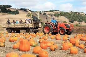Half Moon Bay Pumpkin Patches 2015 by The Best Pumpkin Patches And Corn Mazes In The Bay Area