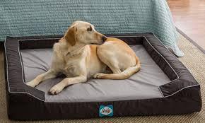 Top Rated Orthopedic Dog Beds by How To Choose A Pet Bed For An Older Dog Overstock Com