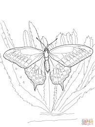 Zebra Longwing Butterfly Coloring Page New Black Swallowtail