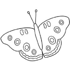 Beautiful Buckeye Butterfly Butterflies Coloring Pages