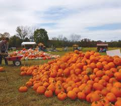 Best Pumpkin Patches In Cincinnati by Hands On Harvest