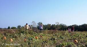 Chesterfield Berry Farm Pumpkin Patch 2015 by Braemar Pick Your Own Pumpkins In Nokesville At Yankey Farms