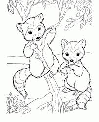Free Cute Raccoon Cartoon Animal Coloring Pages Printable