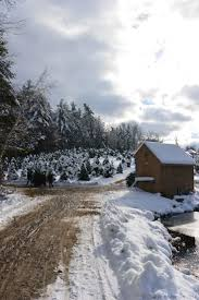 Christmas Tree Shop Falmouth Ma by 23 Best Local Farms Images On Pinterest Meat Grasses And