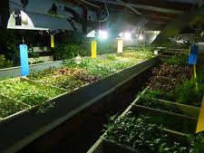 plantes aquatiques vivantes pour aquarium ebay
