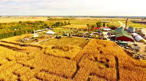 Las Cruces Pumpkin Patch Maze by Siegel U0027s Cottonwood Farm Pumpkin Festival Chicago Tickets 15