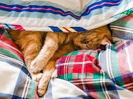 hund und katze nicht im bett schlafen lassen berlin de