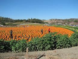 Calabasas Pumpkin Festival 2014 by Pumpkin Patch Cal Poly Pomona Yvette Flickr