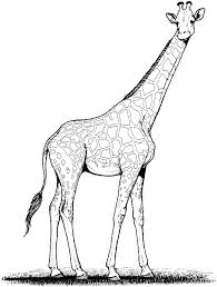 Free Printable Giraffe Coloring Pages For Kids 106 Adults Tone