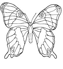 Butterfly Color Pages Cute Coloring Pics