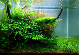Planted Tank Natural Mystic By Alejandro Meneses - Aquarium Design ... Aquascaping Nature Aquariums Of Zoobotanica 2013 Youtube Aquascape The Month November 2009 Riverbank Aquascaping Style Part 5 Roots By Papanikolas Nikos Awards Aquascapes Lab Tutorial River Bottom Natural Aquarium Plants The Planted Tank 40 Gallon Aquarium Everything About Incredible Undwater Art Cube Tanks Aquariums Dutch Vs How To A Low Tech Part 1