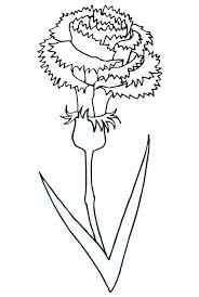 Carnation Coloring Page Pin Flower Pages On