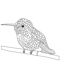 Bee Hummingbird Coloring Pages On Branch