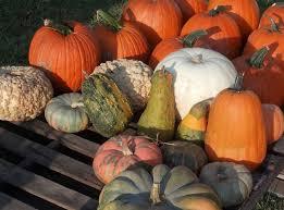 Old Auburn Pumpkin Patch by Vestavia Hills U0027 Saint Mark United To Host Annual U0027pumpkins For