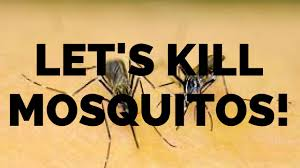 HOW TO GET RID OF & KILL MOSQUITOES IN THE YARD IN CHARLESTON ... How To Remove Mosquitoes From Your Backyard Youtube 25 Unique Mosquito Spray Ideas On Pinterest Natural Mosquito Keep Mosquitoes Out Of Your Yard For A Month And Longer With Ways Repel Accidentally Green To Get Rid Of Bugs In Backyard Enjoy Bbq Picture With Gnats In The House Kitchen Plants Organically 9 Steps Pictures Best Sprays Insect Cop 27 Banish From Next Barbecue Roaches Fleas Ants Repelling Plants Plant Citronella Lemongrass