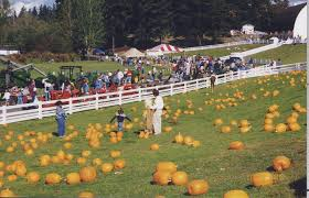 Pumpkin Patch Near Issaquah Wa by Fall Activities For Seattle Families