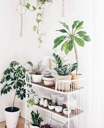 pflanzenecke im wohnzimmer wohnzimmer pflanzen pflanzen