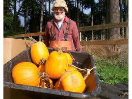 Pumpkin Patch Issaquah by Fairbank Animal Farm In October This P Patch Is All About The