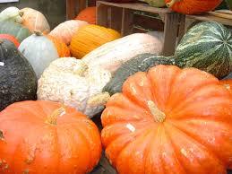 Largest Pumpkin Ever Weight by Pumpkins Pumpkins Pumpkins