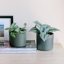 fantastische pflanzen für dein schlafzimmer und deine