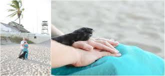 joe gabrielle are engaged bathtub beach stuart fl danielle