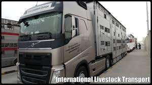 100 Livestock Trucking Companies KMR Europe
