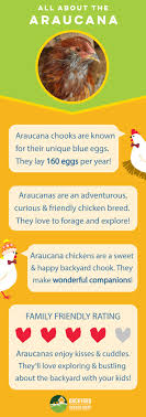20 Best Araucana Chickens Images On Pinterest | Chicken, Read More ... Happiness Is Is Pinterest And Sadness Map The Best Places To Drink Outdoors In Bedstuy Patios Outdoor Rooms Landscape America Chickens Return Sydney Backyards Living Local Guide Happy Hour 26 Photos And Storage Sheds Tiki Bar Nashville Springfree Trampoline Archives Youtube Backyard For Kids Ground Light Fixture Ding Room Chairs With Tennsees Leader Swing Sets Trampolines Basketball Hoops Ladera Heights