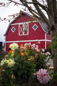 Swan Pumpkin Patch Snohomish by Things To Do Near Stocker Farms With Kids Snohomish Wa Trekaroo