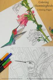 Two Hummingbird Coloring Pages From Hummingbirds Pens And Color Pencils