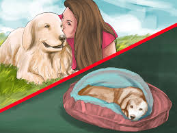 Do Bullmastiffs Shed A Lot by 3 Ways To Bring Up A Loyal Dog Wikihow