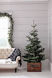 Small Tree In A Vintage Farmhouse Crate