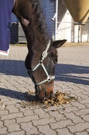 selbst gebackener kuchen fürs pferd reitsport ch