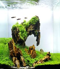 Aquascape Designs Inc Aquarium Ideas From The Art Of The Planted ... Cuisine Perfect Aquascape Aquarium Designs Ideas With Hd Backyard Design Group Hlight And Shadow Design For Your St Charles Il Aqua We Share Your Passion For Success Classic Series Grande Skimmer Aquascapes Amazoncom 20006 Aquascapepro 100 Submersible Pump Pond Supply Appartment Freshwater Custom 87 Best No Plant Images On Pinterest Ideas