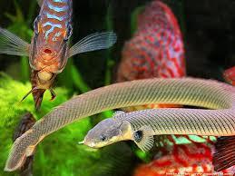 poisson eau douce aquarium tropical aquarium pour poisson d eau douce poisson naturel