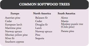 Christmas Tree Types In California by Coniferous Forest Science In Context