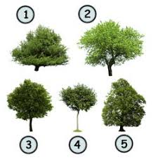 Drawing trees might not seem so difficult at first But with the vast variety of trees available out there it s not always easy to draw all of them