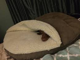 Snoozer Cozy Cave Pet Bed by Accessories Dog Bed With Blanket Attached And Cozy Cave Dog Bed