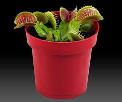 light bulb terrarium is a setting for plants randommization