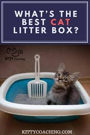 best cat litter boxes whats the best cat litter box for your needs kittycoaching