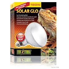 Bearded Dragon Heat Lamp Went Out by Amazon Com Exo Terra Sun Glo Basking Infrared Spot Lamp 150