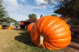 Nekoosa Pumpkin Fest 2017 by Great Pumpkin 9 Fun Facts About The Halloween Gourd